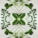 verdure3
